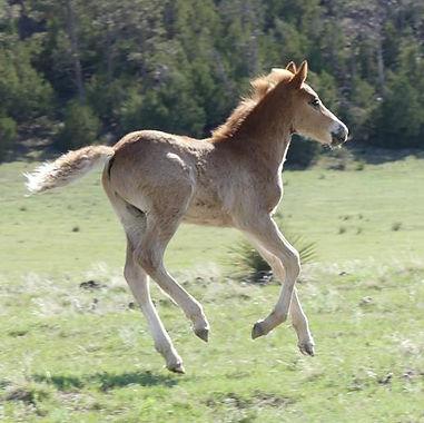 RunningFoal150.jpg
