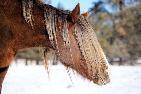 Wild Mustang, Rescue Horse