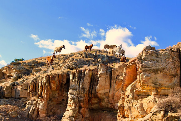 "Mounted Canvas Print - Wild Horses on the Sandstone Rimrock (24"" x 16"")"