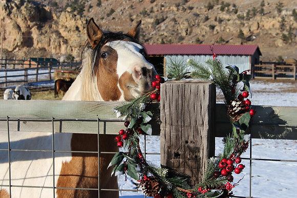 Choctaw Pony Christmas Holiday (5) Greeting Card Set