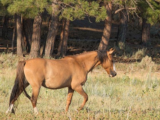 Spanish Mustang Buckshot Four Seasons Friend