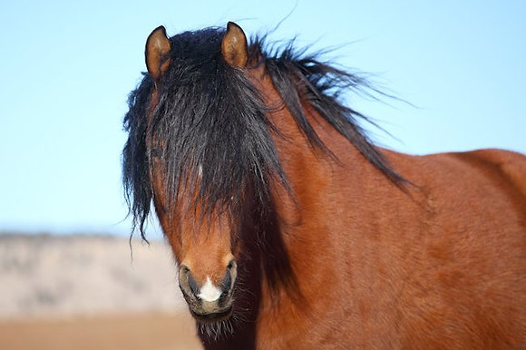 Spanish Mustang Montego Bay Sponsor