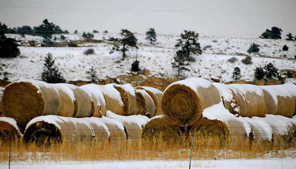 Winter Hay for the Horses