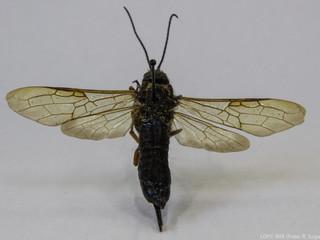 Teste de DNA em insetos? Sim!
