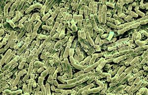MicrobeWiki