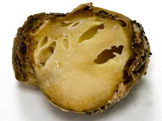 Nova praga da batata no Brasil