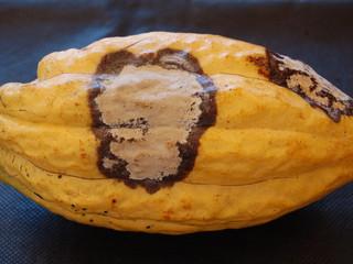 Primeiro registro de monilíase em cacau na Jamaica