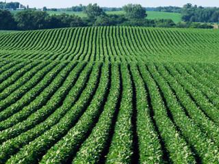 Monitoramento de pragas do futuro: avanços na detecção de doenças de plantas cultivadas