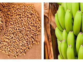 Requisitos Fitossanitários para banana e soja atualizados no MERCOSUL