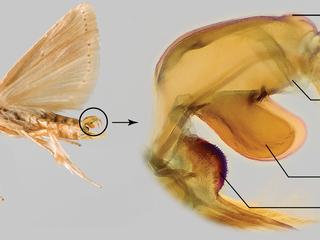 O primeiro passo para um programa de MIP é saber identificar as espécies de pragas