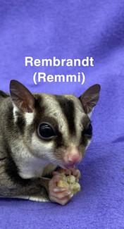 Remmi