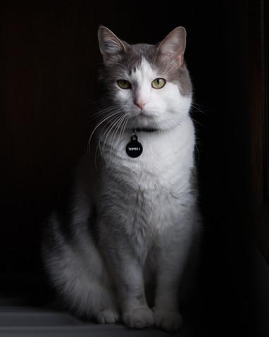 kitties-1.jpg