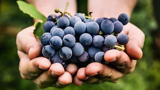 grapes-190903-800x450.jpg