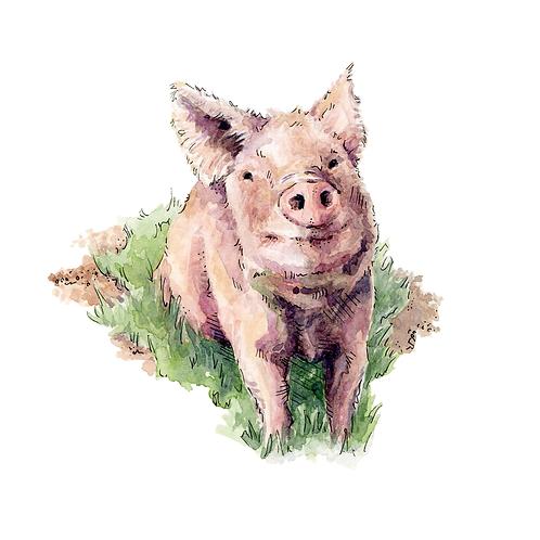 Pig (2017)