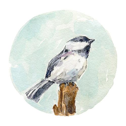 Chickadee (#2)