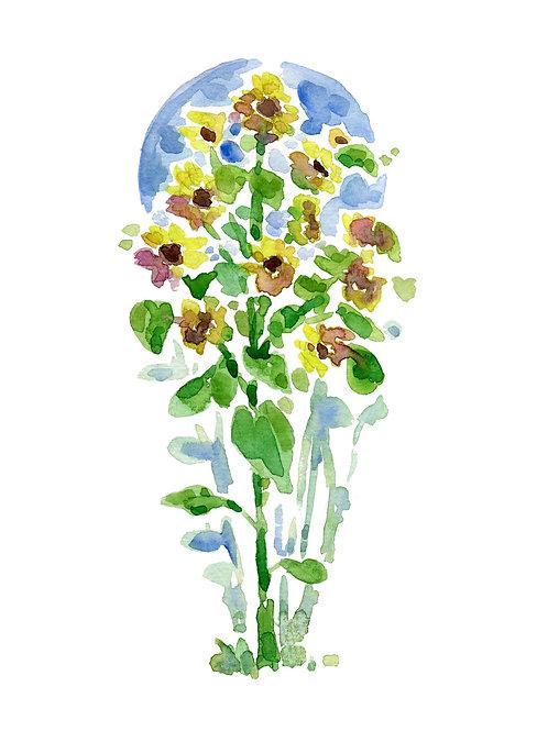 Sunflower Stalks (5x7 PRINT)
