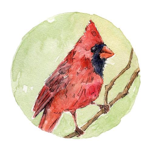 Cardinal (#2)