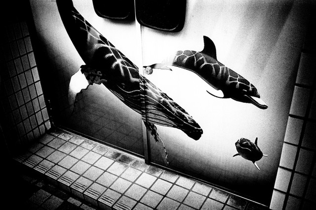 三茶、クジラ のコピー.jpg