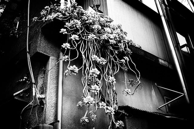 ツタ植物 のコピー.jpg