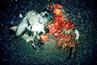 鳥死骸01_05_15 のコピー.jpg
