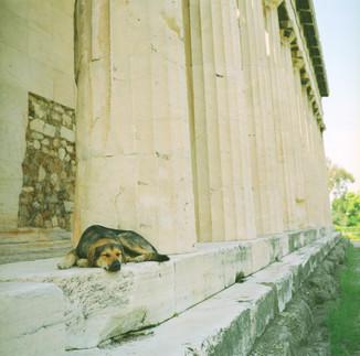 アテネ犬03_03_28 のコピー.jpg