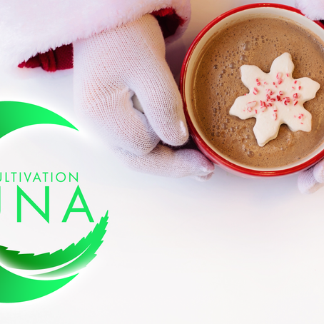 The Best CBD Oil Drink Recipes to Make During the Winter Season