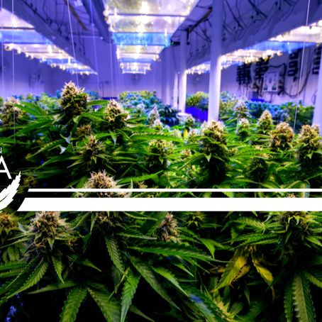Light Spectrums: Which Are Right for Hemp?