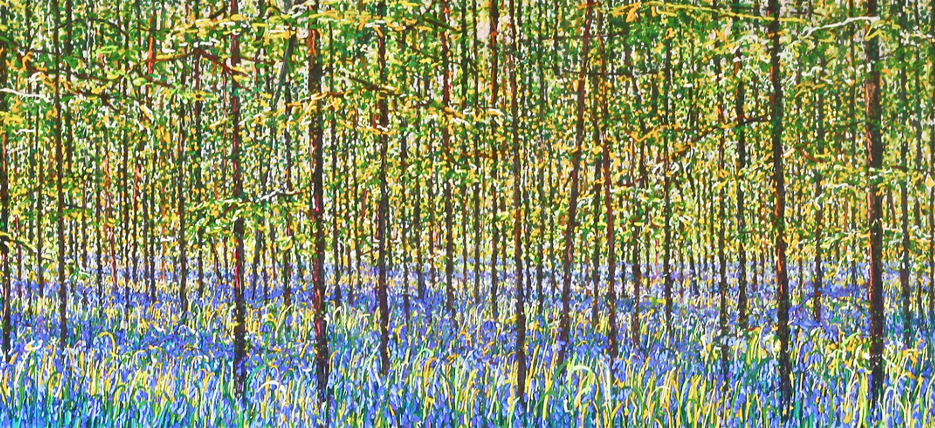 'Bluebell Wood, 2015'