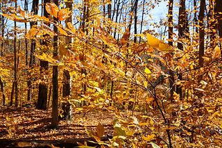 Arbres automne - Ma yourte au coeur des