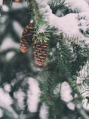 Arbre hiver - Ma Yourte au Coeur des Col