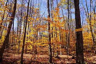 Sentiers d'automne - Ma yourte au coeur