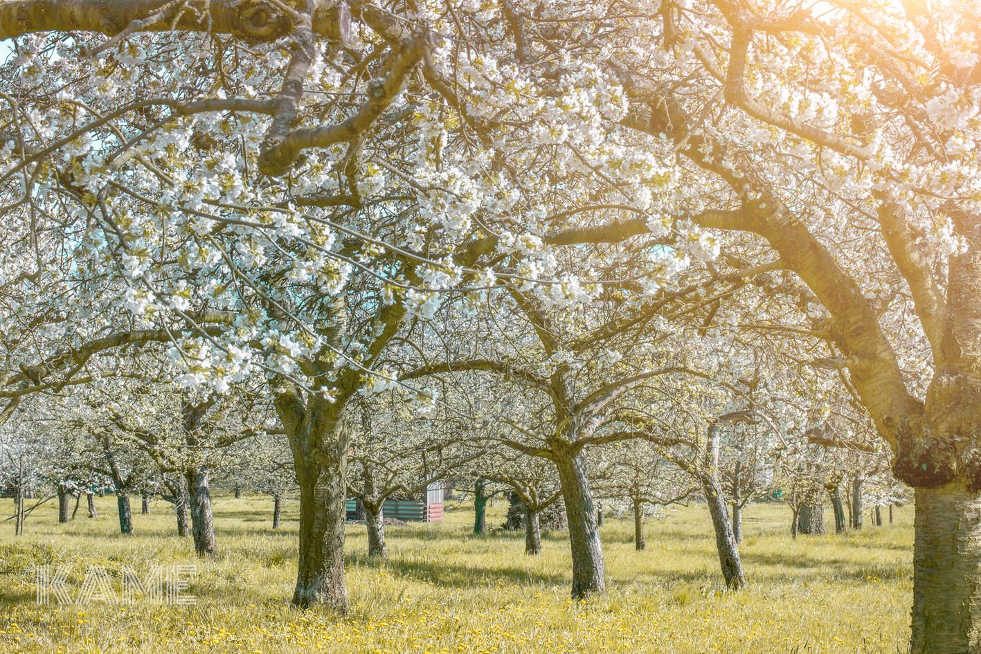 Frühlingsbäume.jpg