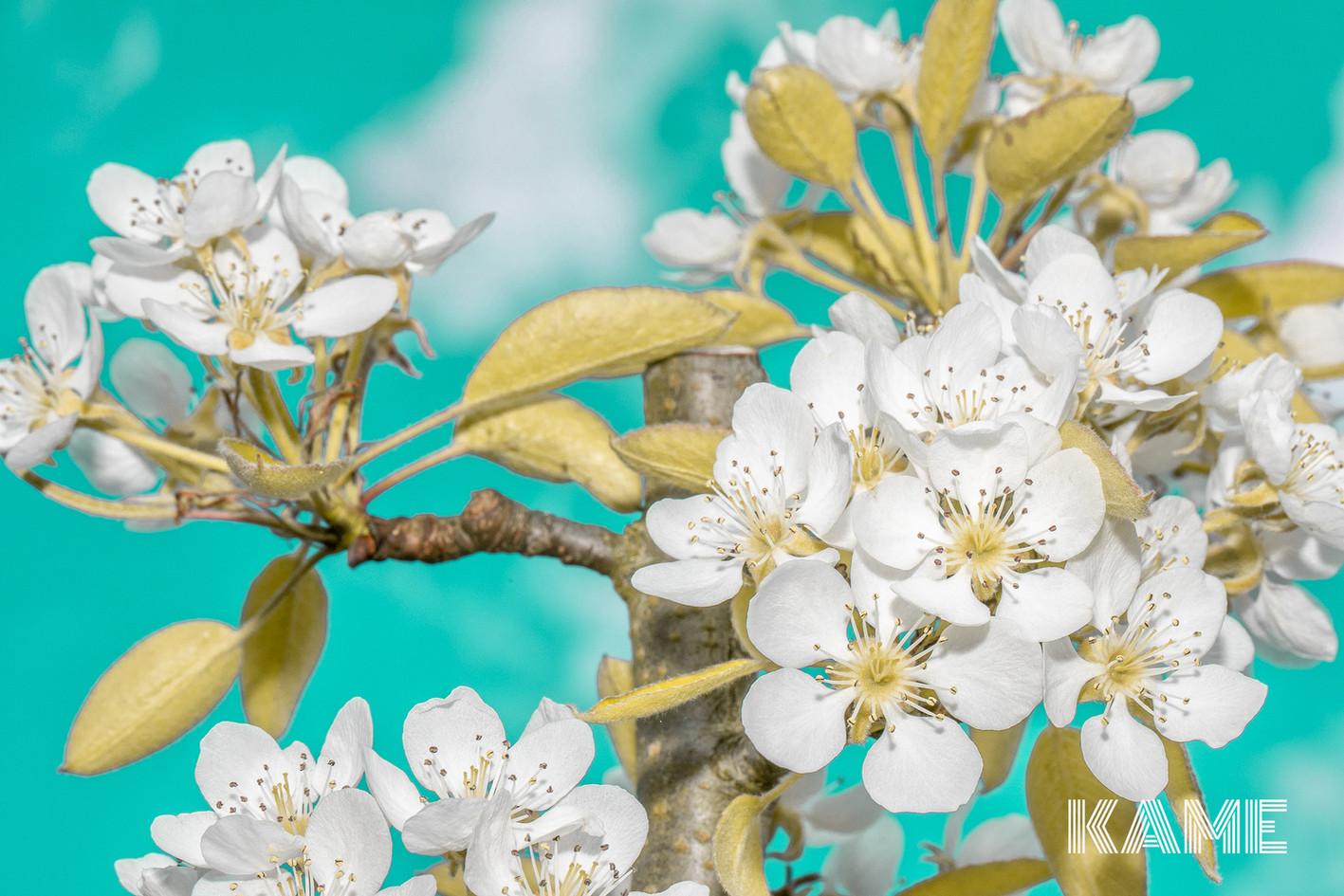 Frühlingsblühten.jpg