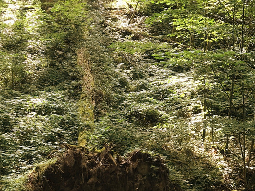 Schwarzwald, geheimnisvoll und schön!