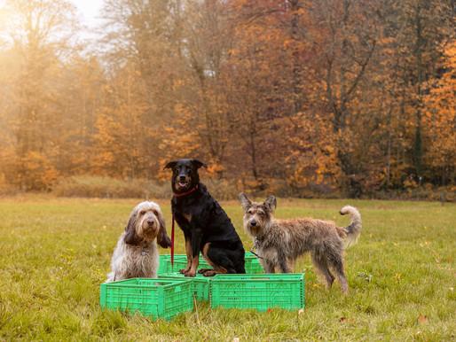 Frau Wunsch und Ihre Arbeit als Hundetrainerin
