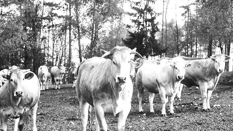 Journée boeuf maturé dans la ferme d'Alexandre Polmard