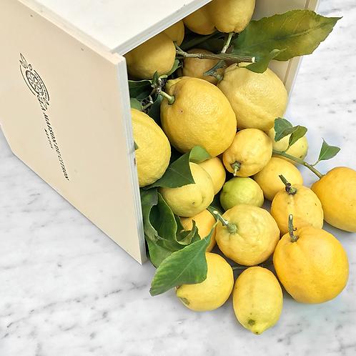 Citrons de Menton frais BIO - 4,5kg