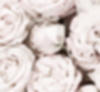 PALE PINK ROSES.png