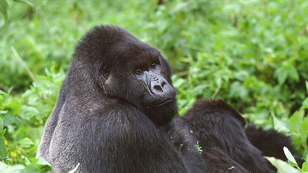 Rwanda News & Events | African Dreams Photo Safaris