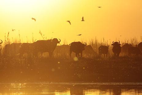 Hunt to Preserve Africa - Elaine Ness- Hunting Dangerous Game Terrain