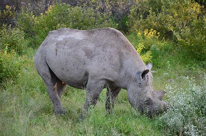African Rhino News & Events | African Dreams Photo Safaris
