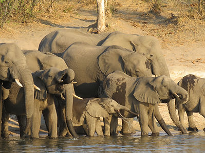 Namibia News & Events | African Dreams Photo Safaris