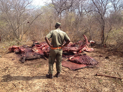 Hunt to Preserve Africa - Elaine Ness- Hunting Dangerous Game Terrain