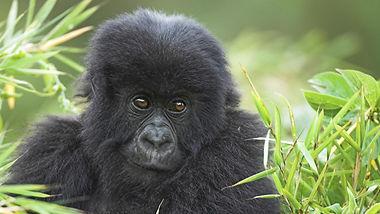 Rwanda Kenya Serengetti 13 nights African Dreams Photo Safaris