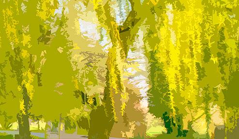 Willows BsS.jpg