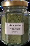 Rhizoclonium%20riparium_edited.png
