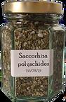 Saccorhiza%20polyschides_edited.png