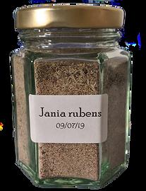 Jania%20rubens_edited.png