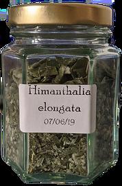 Himanthalia%20elongata_edited.png
