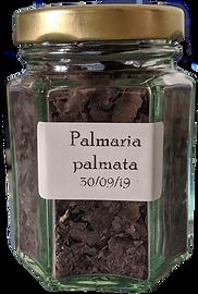 Palmaria%20palmata_edited.png